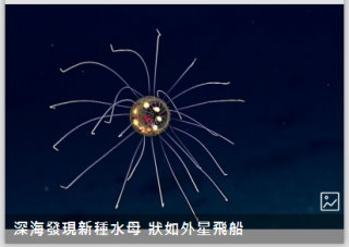 深海發現新種水母 狀如外星飛船